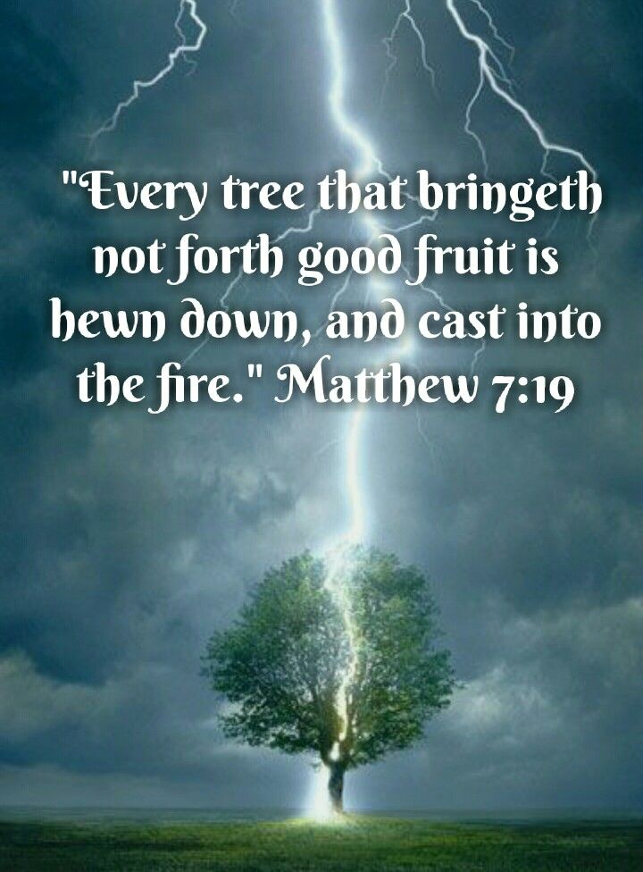 Matthew 7:19 (KJV) Every tree that bringeth not forth good fruit is hewn  down, and cast into the fire. | Knowing god, Last day quotes, Scripture  quotes