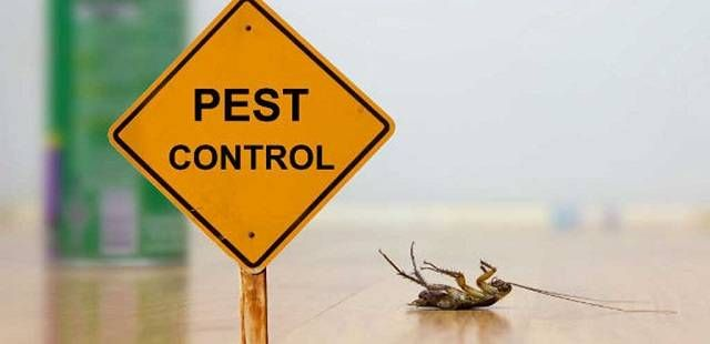 Pros And Cons Of Using Pest Control Services Pest Control Pest Control Services Best Pest Control