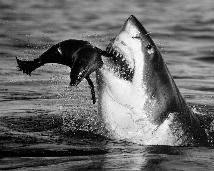 David Yarrow (@David_Yarrow) | Twitter Il est essentiel de protéger nos océans. Ce sont des belles créatures et que nous devons faire tout que notre possible pour leur permettre de prospérer. #WorldOceansDay