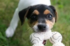 #dog #dog #puppy #pup #TagsForLikes #cute #eyes #instagood #dogs_of_instagram #pet #pets #animal #animals #petstagram #petsagram #dogsitting #photooftheday #dogsofinstagram #ilovemydog #instagramdogs #nature #dogstagram #dogoftheday #lovedogs #lovepuppies #hound #adorable #doglover #instapuppy #instadog