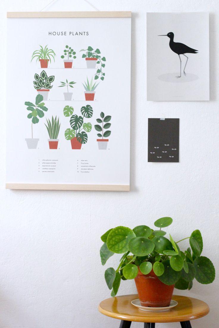Titel: Zimmerpflanzen   Die zehn beliebtesten und schönsten Zimmerpflanzen an Ihrer Wand hängen! Keine Notwendigkeit für die Bewässerung ;-)   Größe: A2 420 x 594 mm (16,5  x 23,4 )  Hochwertiger Druck, 100 % Recyclingpapier, 170 g/qm  ……………………………………………………………………………………………………   Klicken Sie auf die Bilder für eine größere, detailliertere Ansicht.  Bitte beachten Sie, dass der Druck ohne Rahmen und andere Gegenstände auf den Bildern kommt.  Durch unterschiedliche Kalibrierung von…