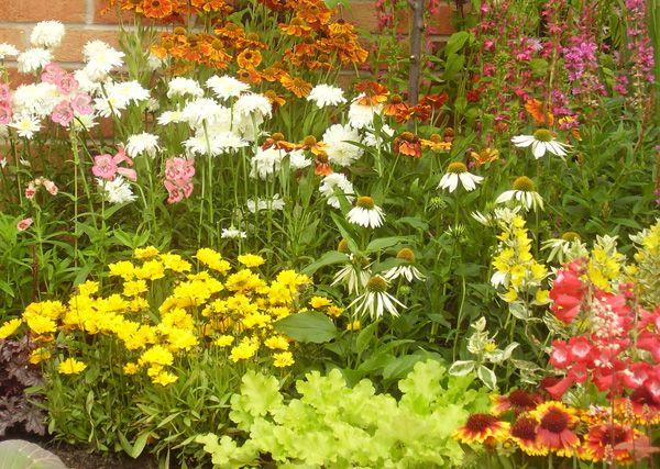 Verzorging en zaaien van weidebloemen | Happy Seeds