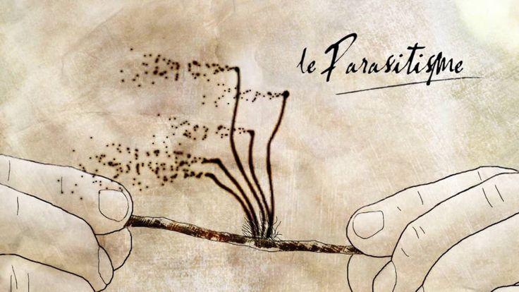 Vidéo :  Fonctionnement des parasites par Francis Hallé.
