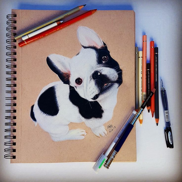 Bulldog francés dibujo