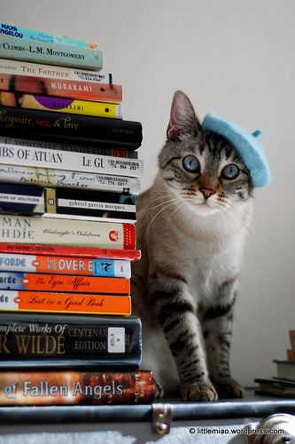 A pile of books and a cat in a beret.