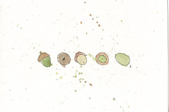 Acorn Watercolour Illustration by emilieOillustration on Etsy