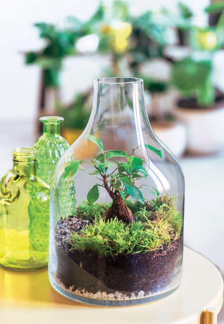 les 132 meilleures images du tableau truffaut plantes d 39 int rieur sur pinterest plantes. Black Bedroom Furniture Sets. Home Design Ideas