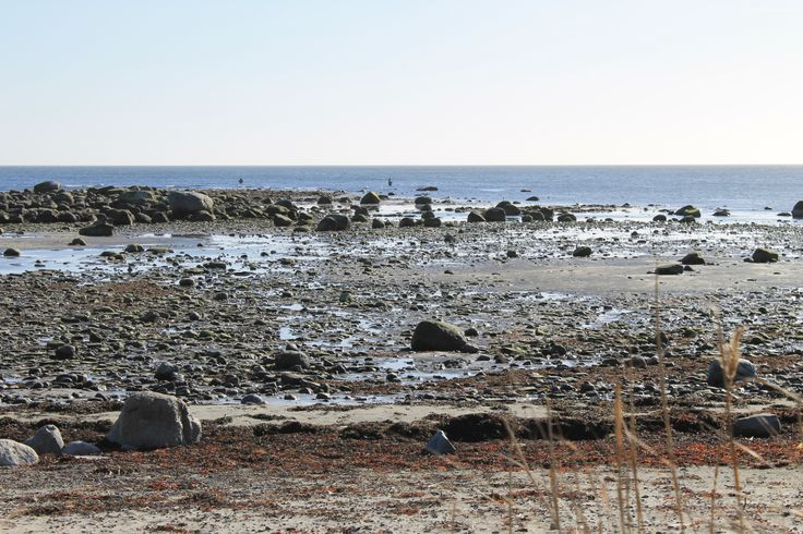 The coastline of Skillinge is populare by fishermen.