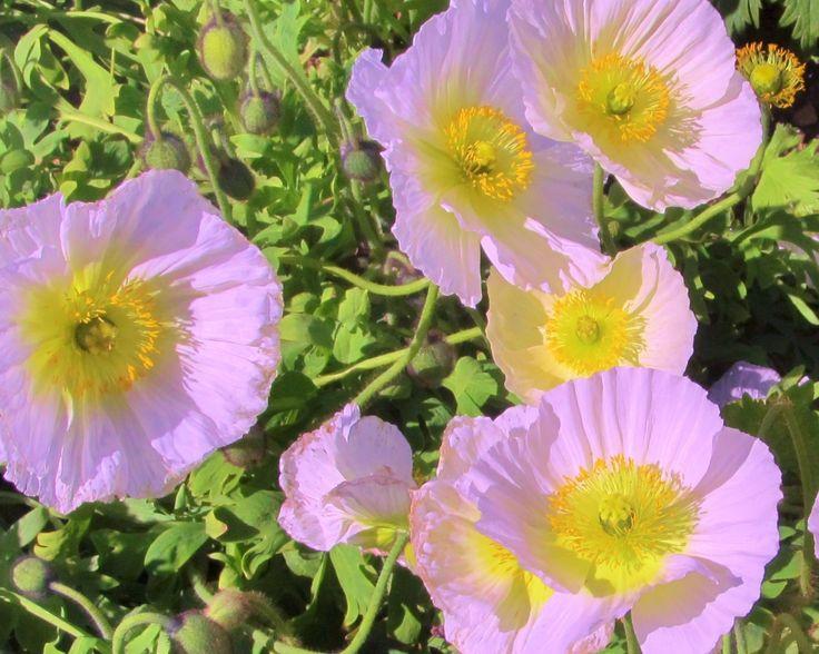 100 best california spring flowers pasha polikarpov art images on spring flowers california art art background kunst art supplies spring colors artworks mightylinksfo