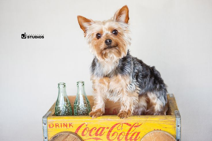 Get creative with your props! Puppy in Coca-Cola crate photography