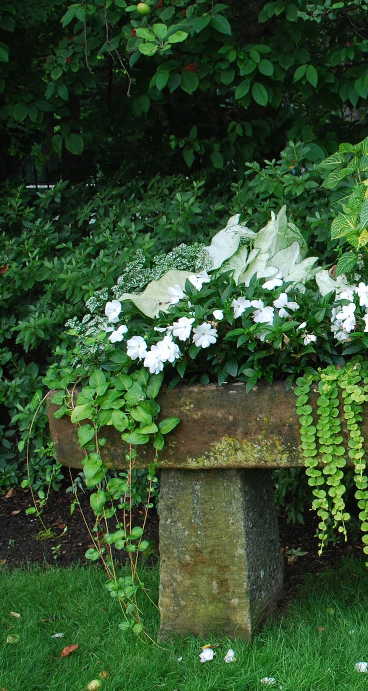Absinthe's Garden:  White #Caladiums, Lime #Irisine, and New Guinea #Impatiens in an antique English trough.