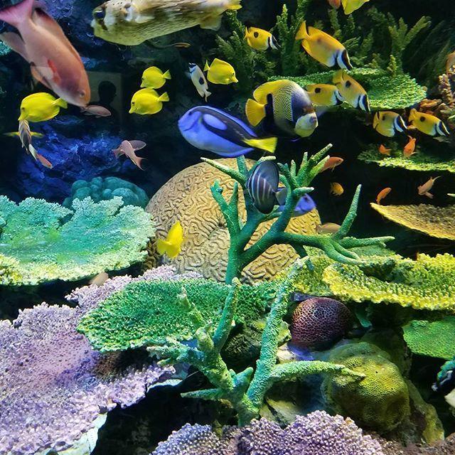 【fuyu.l】さんのInstagramをピンしています。 《#ファインディングニモ#FindingNemo#ファインディングドリー#FindingDory#ファインダー越しの私の世界#ふ ぁいんだー越しの私の世界#やっぱり水中が好き#水族館が好き#アクアリウム#aquarium#魚#さかな#お魚#fish#フィッシュ#池袋#サンシャイン#サンシャイン60#サンシャイン水族館#青の世界#水中#青#碧#ブルー#blue#東京都#年末》