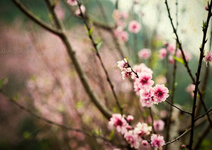 Sweet pink flower  by ptystockphoto on @creativemarket