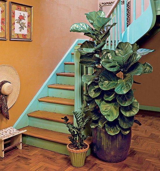 O sobe e desce pela escada seria menos interessante sem a presença da figueira-lira, uma árvore que alcança até 12 m quando plantada em solo...
