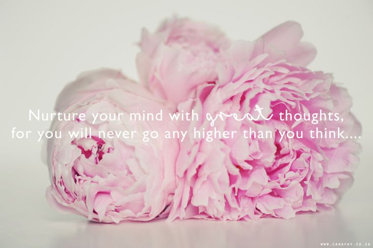 peonies | smell the flowers