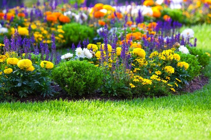 Creating the perfect flower bed is actually a two-part process. There are obviously the flowers, and then there is the soil. There are recommendations for both.