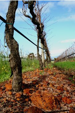 """The combination of soil and ferricret, known in Afrikaans as """"koffieklip"""", is unique to Anwilka! #soil #vineyards #Anwilka"""