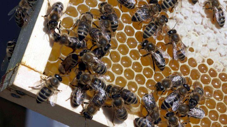 Befőzés helyett saját méz lesz a divat?  http://ahiramiszamit.blogspot.ro/2016/07/befozes-helyett-sajat-mez-lesz-divat.html