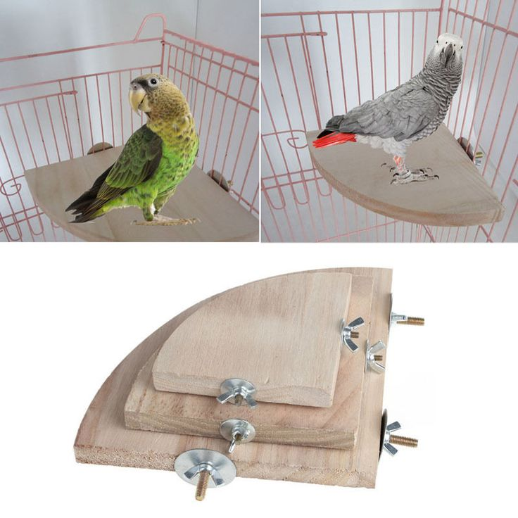 Parrot Bird Cage Perches Stand board Pet Parakeet Budgie Toys Hanging Resk Toy Fan Shape Wooden Parrot Bird training Toy // FREE Shipping //     Get it here ---> https://thepetscastle.com/parrot-bird-cage-perches-stand-board-pet-parakeet-budgie-toys-hanging-resk-toy-fan-shape-wooden-parrot-bird-training-toy/    #catoftheday #kittens #ilovemycat #lovedogs #pup