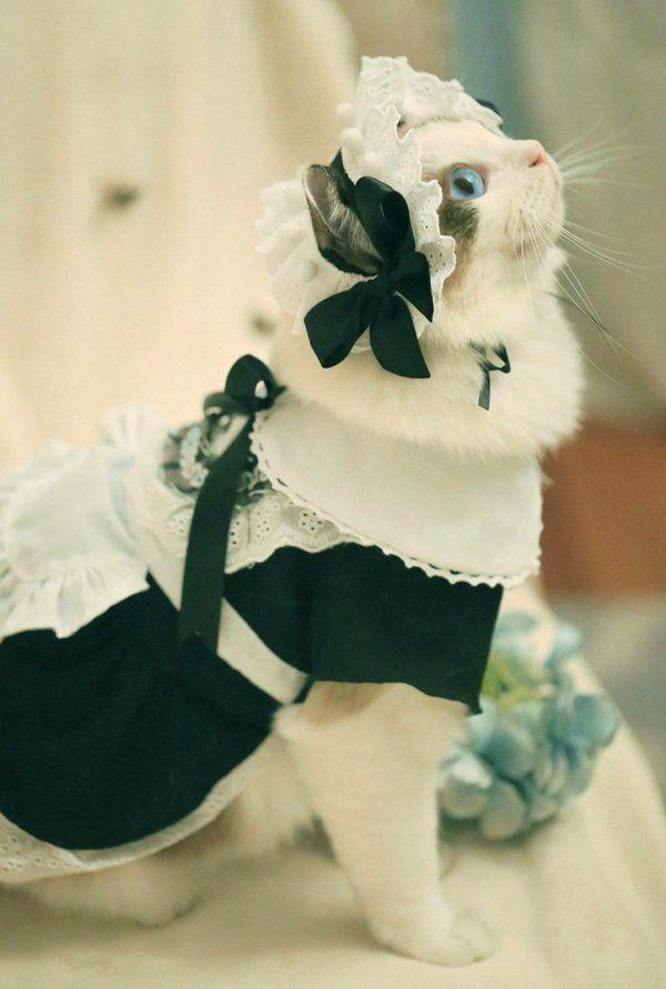 Сама фотогеничность кот, животные, фотогеничность, фото, котофотогеничность, длиннопост, рэгдолл