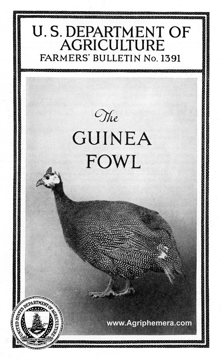 13 best poultry images on pinterest backyard chickens chicken this agricultural bulletin from 1940 has 12 pages and 7 photographs topics covered are demand for guinea fowl in the united states nvjuhfo Image collections