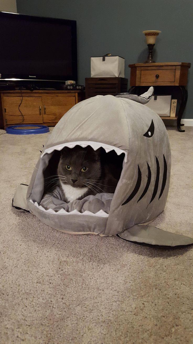 So we go a shark bed for our cat Heathcliff. He seems
