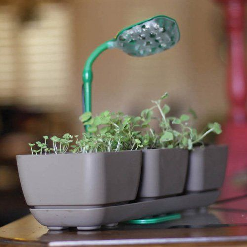These make great gifts for the gardeners in your life.  Fertile Earth LiteStik General House Plant LED Grow Light  #WalmartGreen
