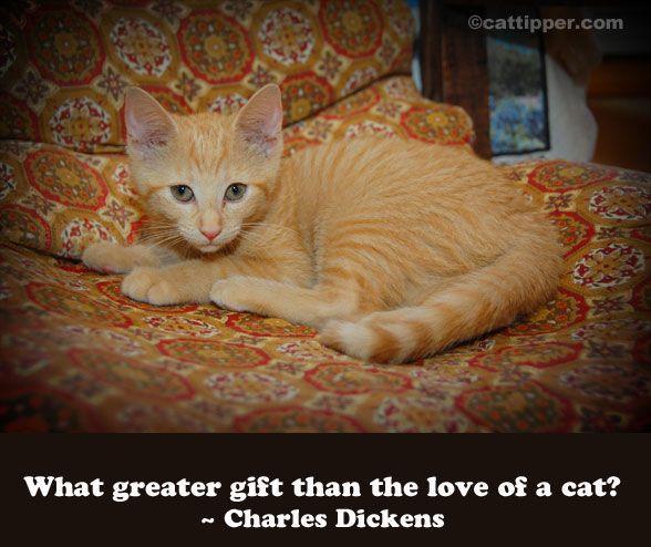 955fd90381793e9b226f8ea386988871 - Cat Quotes - Quotable Quotes