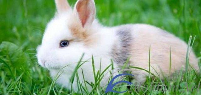 تفسير رؤية ذبح الأرنب في المنام للعزباء والمتزوجة للنابلسي الأرنب في الحلم الأرنب في المنام الأرنب للحامل تفسير حلم الأرنب Animals Rabbit