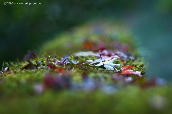 AUTUMN by de lo, via Behance: Gardens Japan
