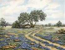 pictures od texas blue bonnets - - Yahoo Image Search Results