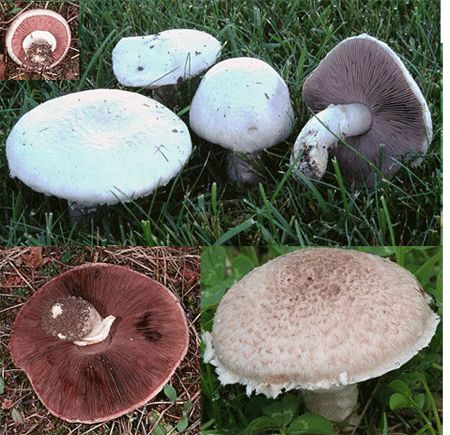 how to tell if a mushroom is edible uk