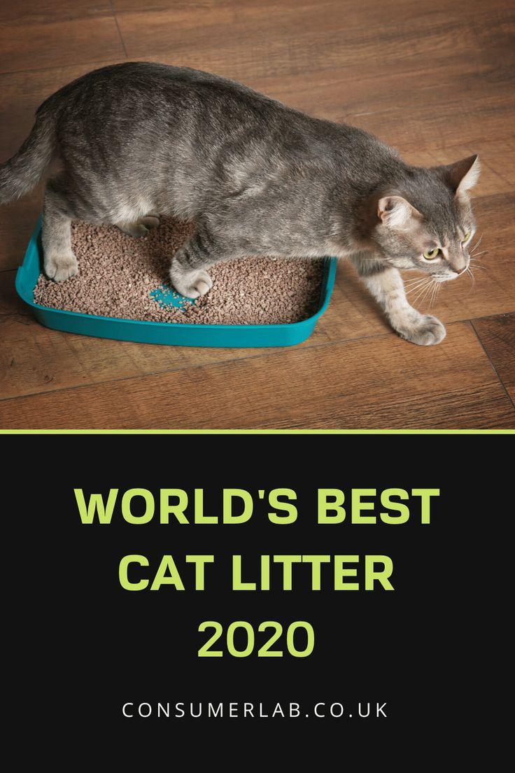 The Best Cat Litter in the UK in 2020 Best cat litter