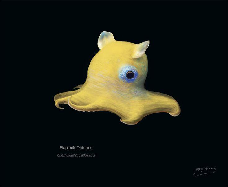 Illustration of a Flapjack Octopus.   Animals ...