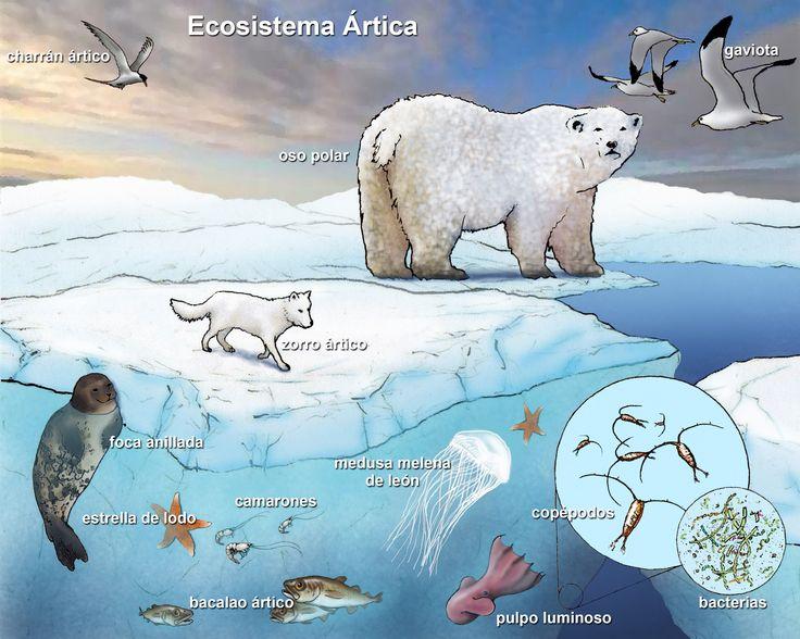 Marine Ecosystem | ... language versions of the titled labeled marine ecosystem illustrations
