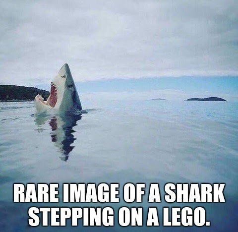 Rare image of a shark stepping on a Lego.