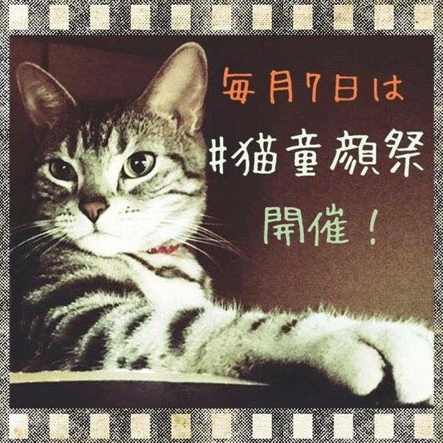 告知です!  9月7日に第3回、猫童顔祭 を開催します。  参加資格はどなたでもOKです。 童顔な猫ちゃんや、もちろん子猫ちゃんの参加も大歓迎です。  参加方法は、#猫童顔祭 とハッシュタグを付けるだけ。みんにゃ、ぜひ参加して下さいにゃ。 ・ #猫童顔祭 #ねこ #ねこ部 #にゃんこ部 #猫 #ネコ #あめしょ #アメショ  #アメリカンショートヘア  #にゃんだふるらいふ  #にゃんすたぐらむ #にゃんこ #ねこすたぐらむ #キャット  #cat #catsofinstagram  #americanshorthair #ウェブキャットショー #ウェブキャットショー2 #スタペグラム #みんねこ  #ペコねこ部 #美猫 #愛猫  #猫好きさんと繋がりたい  #ニャンコ幼稚園 #猫胴長部 #あめお