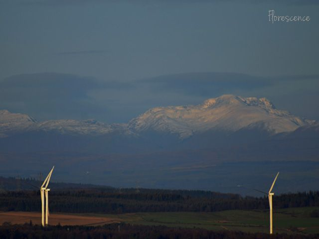 Scotland, (c) Floresence