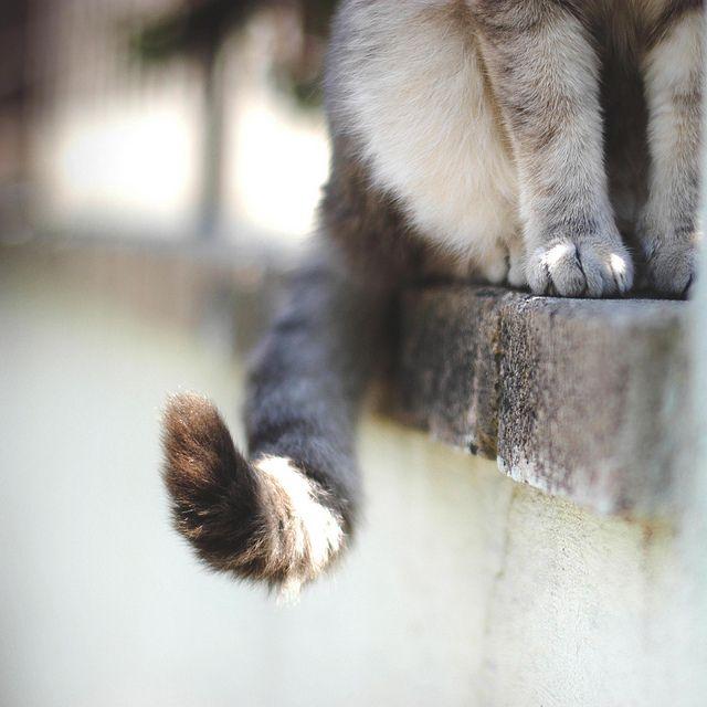 Kitty tail//
