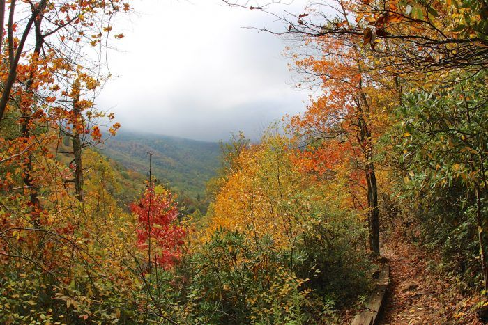 Ever wondered about best time to see Virginia's fall foliage? This map has all the answers.