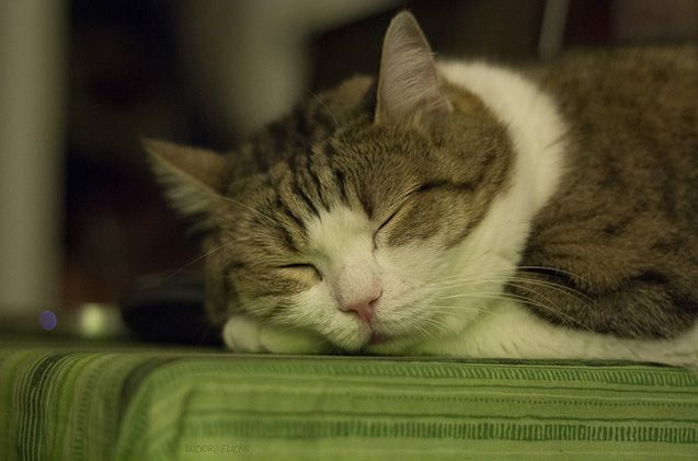 Make your home welcoming to kitties with these cat-friendly tips