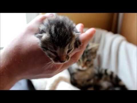 Newborn Baby Kitten - Mother guards lovely - #FelixBcats