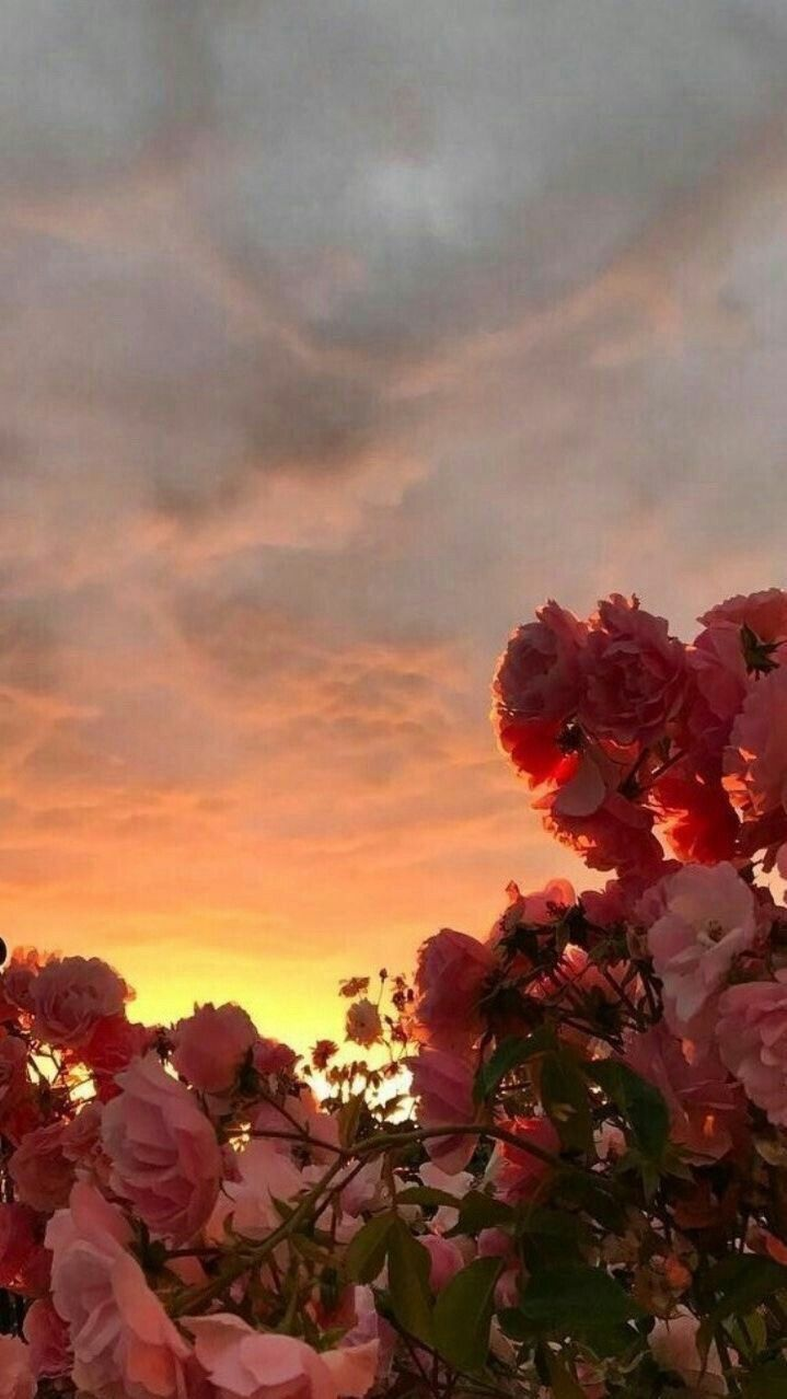 Flowers Wallpaper And Clouds Image Flower Wallpaper Rose
