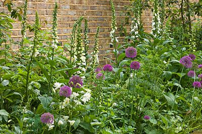 Butter Wakefield ( my new crush ) keeps it simple with Alliums and foxgloves, a perfect combination!