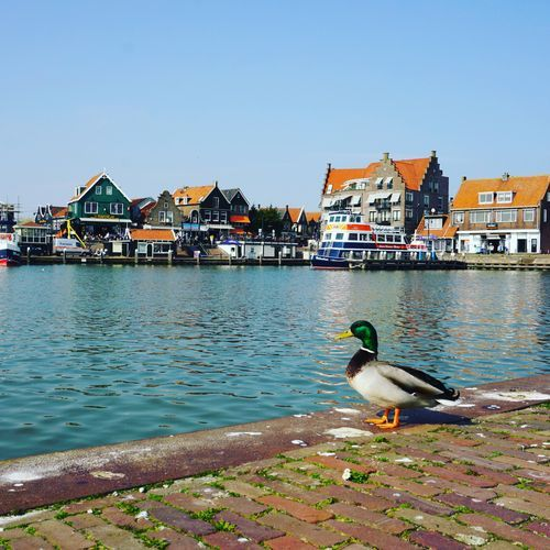 Day trip from Amsterdam - cycling to Volendam