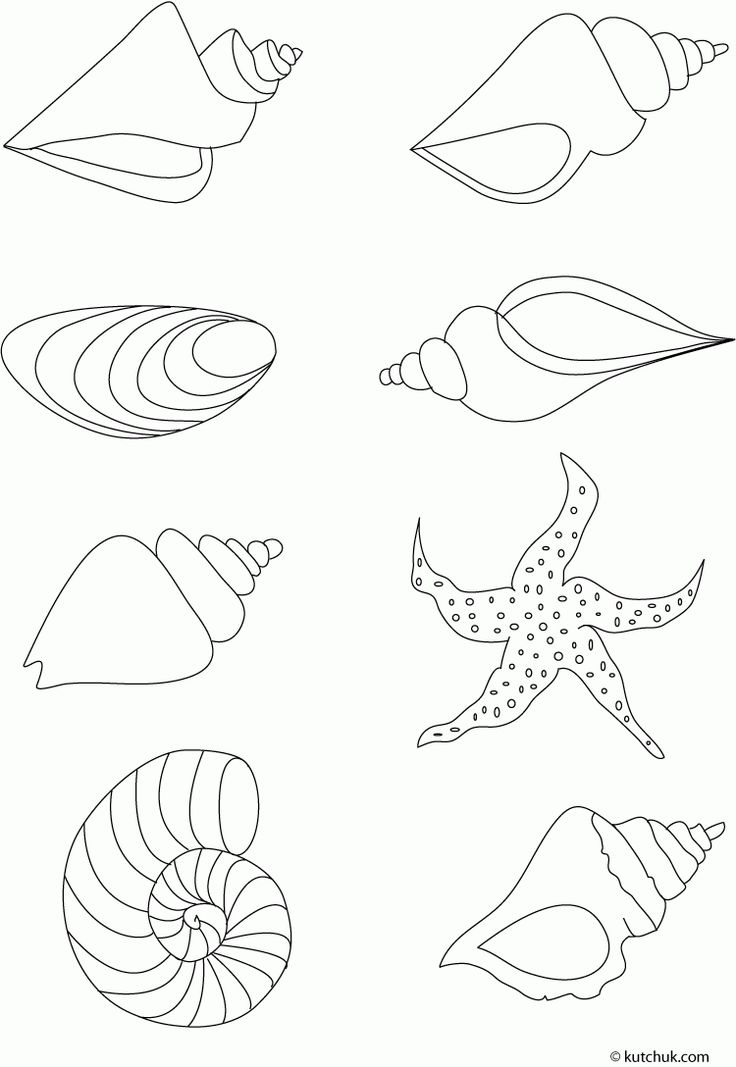 starfish+drawings | Seattle Nature Preschool: Lesson Plan- Turtles