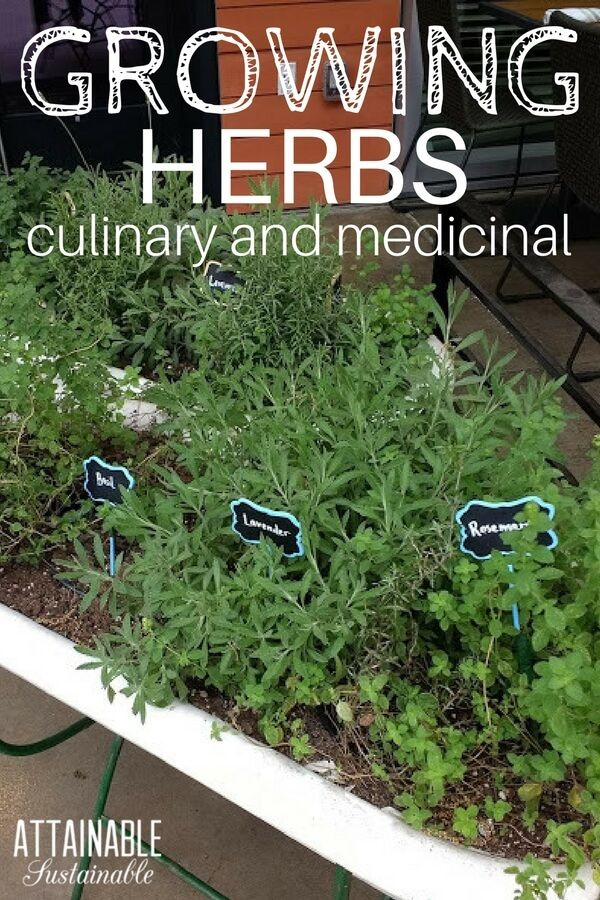 Easy Herbs To Grow In Your Garden For Culinary And Medicinal Use