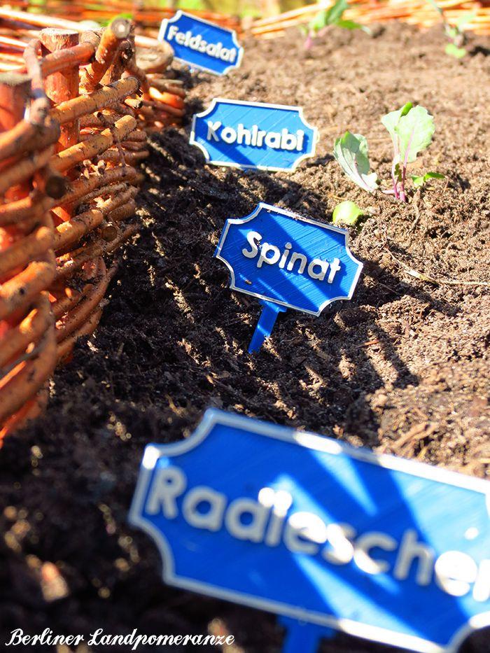 201 best Garden: Berliner Landpomeranze images on Pinterest ...