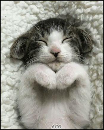 ACG • KITTEN GIF • Sleepy Kitty with amazing ears and praying paws. He is so cute
