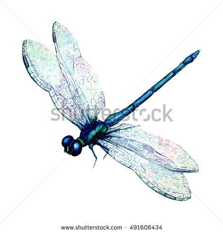 Hand drawn watercolor illustration of blue dragonfly isolated on white  background. Beautiful insect watercolor drawing
